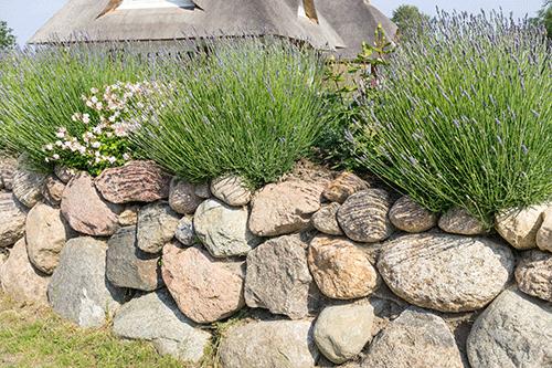 Mit Wunderbesen gereinigte Mauer (Nachher-Foto)